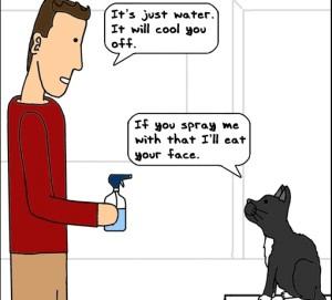 Спрей для кошек