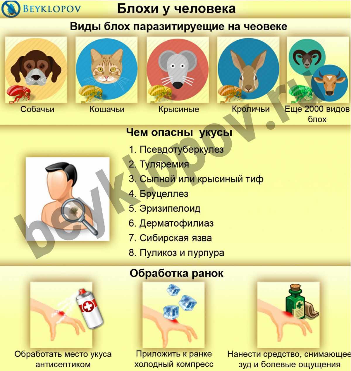 Применение ацекардола для лечения
