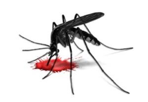 Обыкновенный комар