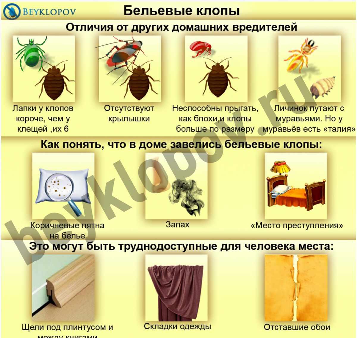 клиника паразитов в организме человека в казани