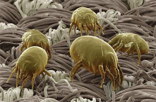 паразиты на коже человека лечение