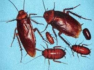 какие паразиты бывают у человека