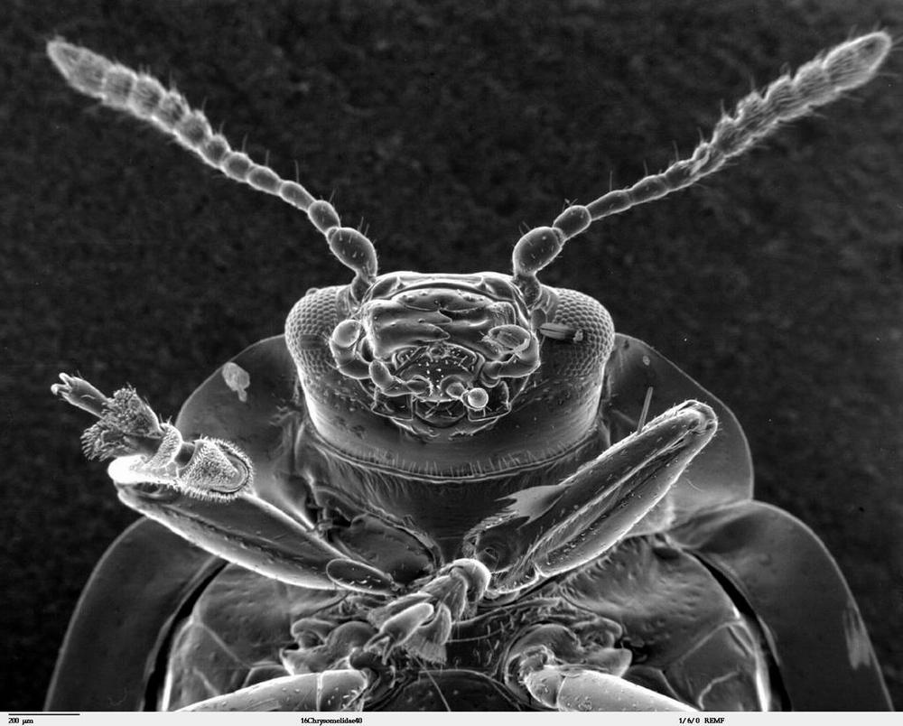 полынь от паразитов в организме человека