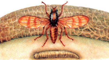 Личинка
