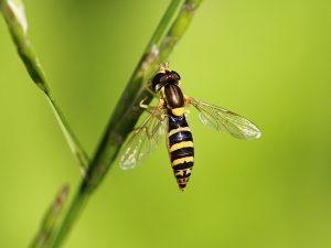 Виды мух, сколько они живут, как выглядят, чем питаются, где обитают и как с ними бороться