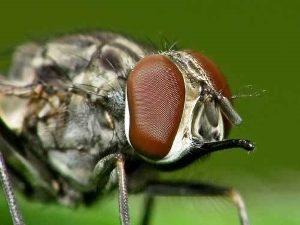 Макросъемка мухи