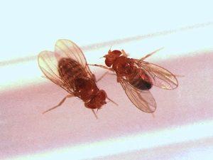 Откуда в наших квартирах берутся мухи
