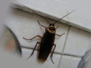 Таракан в ванной комнате
