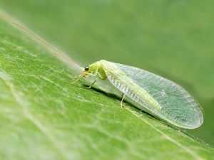 Макросъемка насекомого