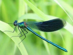 Внешний вид насекомого