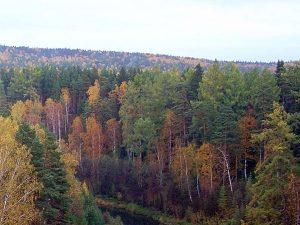 Какие насекомые вредят лесам