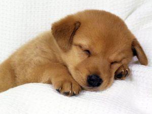 Как вывести блох у щенка 2 месяца в домашних условиях фото