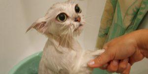 Шампунь для блох от котят фото