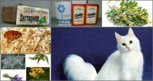 Как избавить котенка от блох народными средствами фото