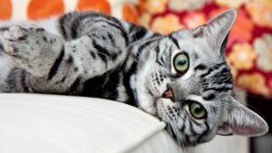 Как вывести блох у кошки народными средствами?