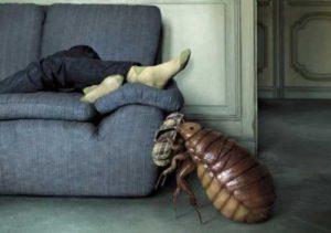 Как избавиться от блох на ковре в квартире