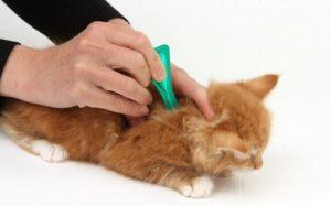 Капли для кошек от блох и клещей. Подробный обзор