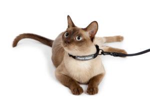 Ошейник чистотел от блох и клещей для кошек и собак, инструкция, фото