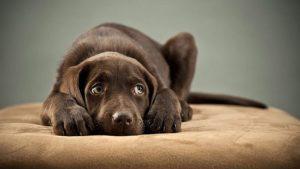 Вакцина от блох и клещей для собак фото