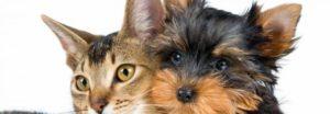 Барс форте капли для котят против блох и клещей – инструкция, фото